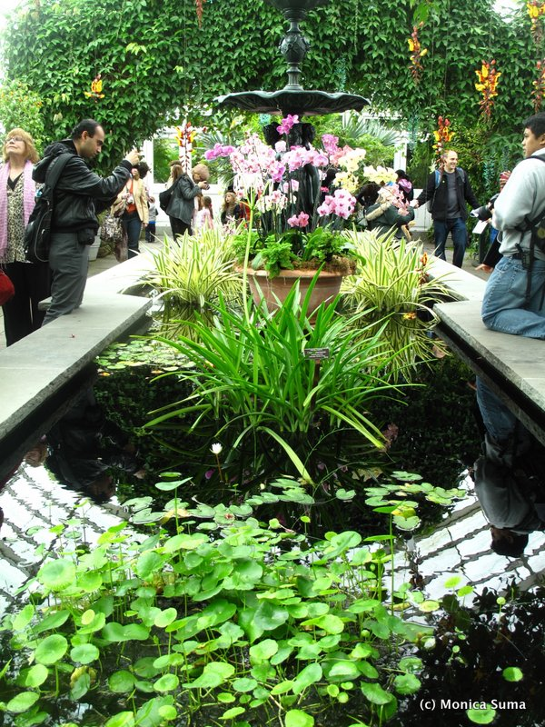 The Orchid Show At The Ny Botanical Garden